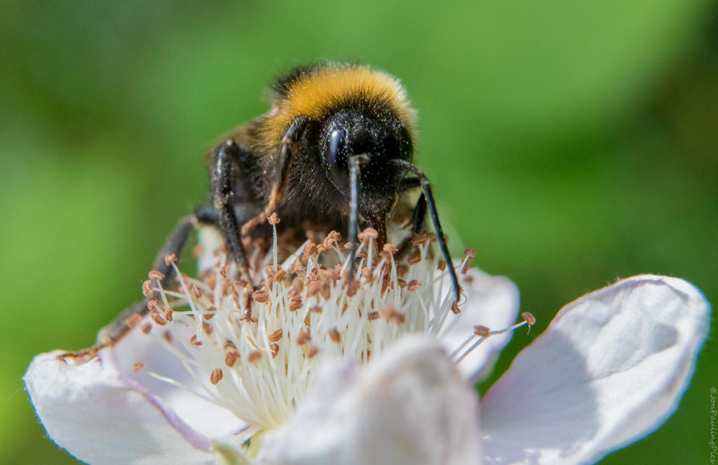Boo Bee by Mincingyoda