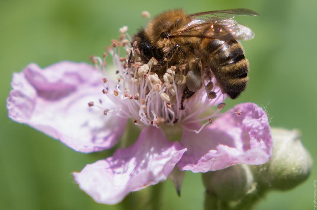 Bee coz by Mincingyoda
