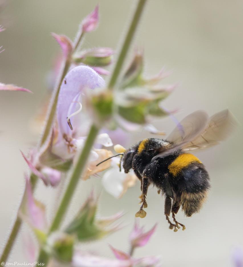 Bee Hunting! by Mincingyoda