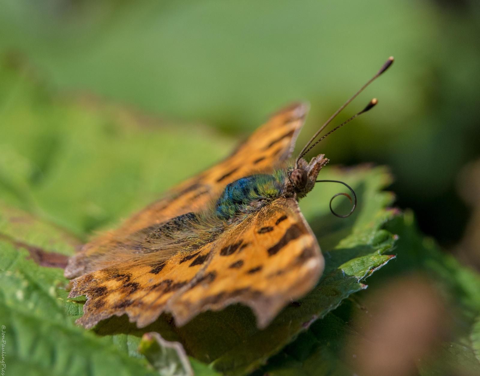 Flutterby by Mincingyoda