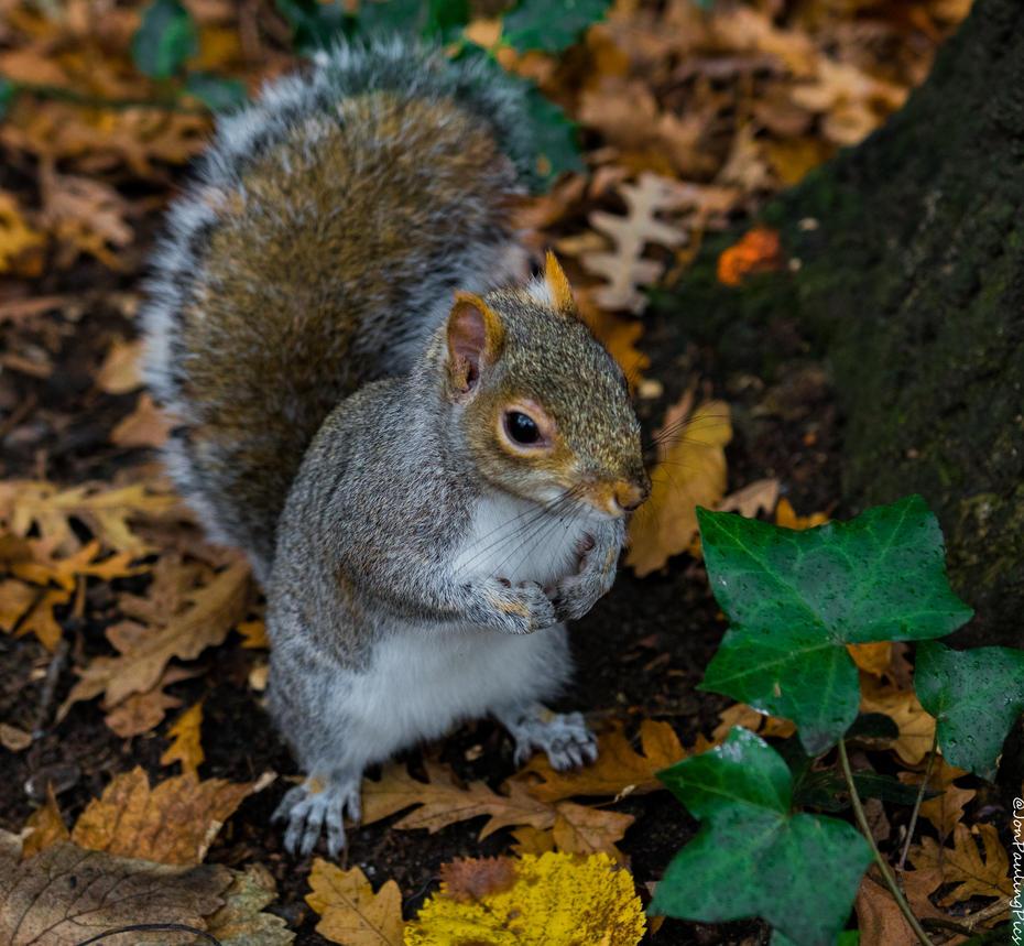 Kyoto Squirrel by Mincingyoda
