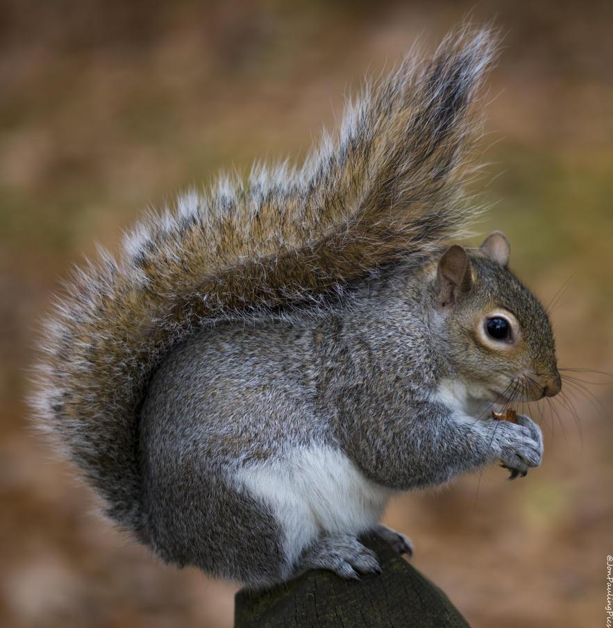 Kyoto Squirrel (4) by Mincingyoda