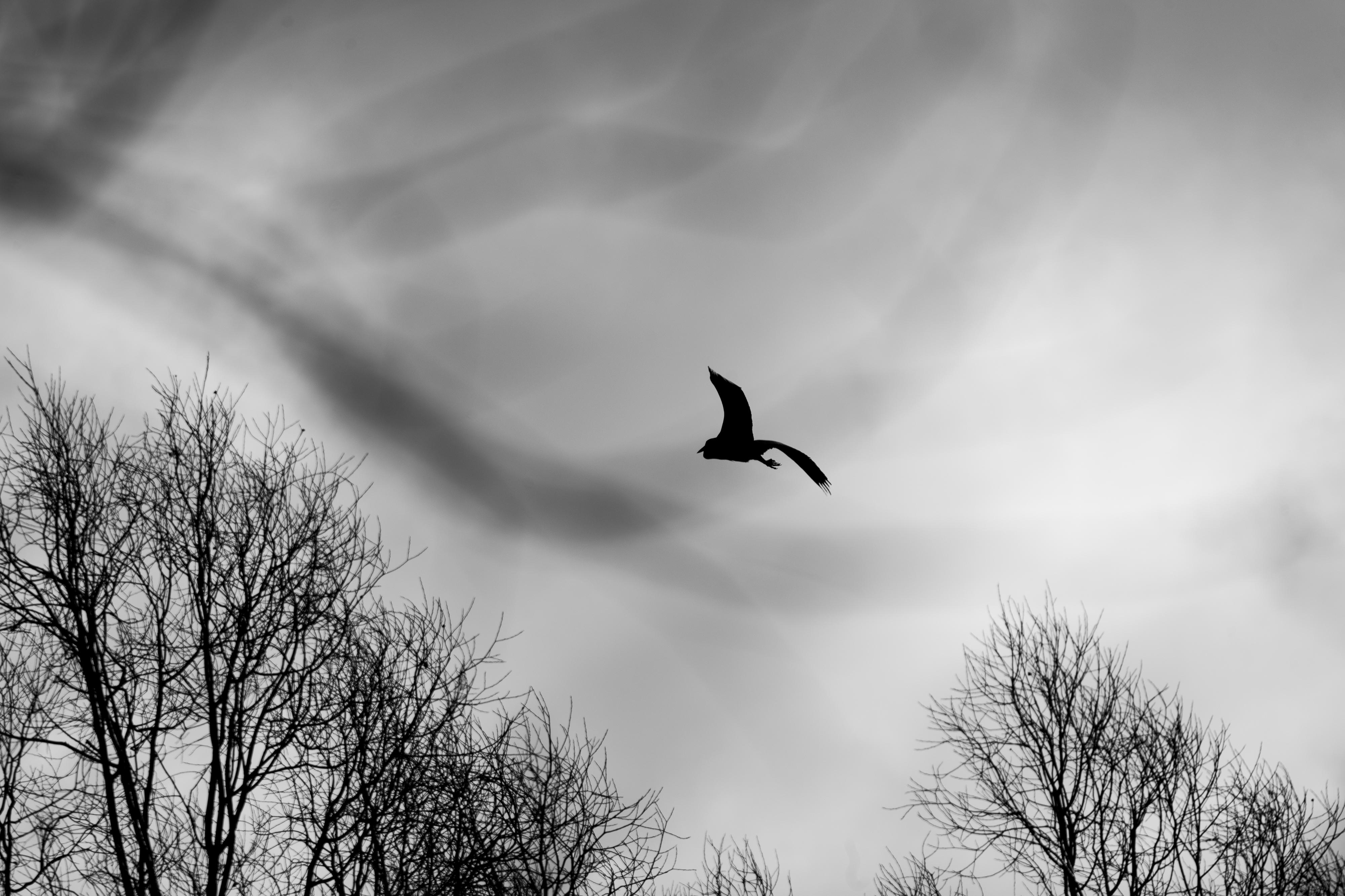 Into Weirder Skies! by Mincingyoda