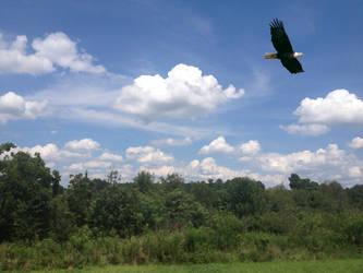 Eagle of Freedom