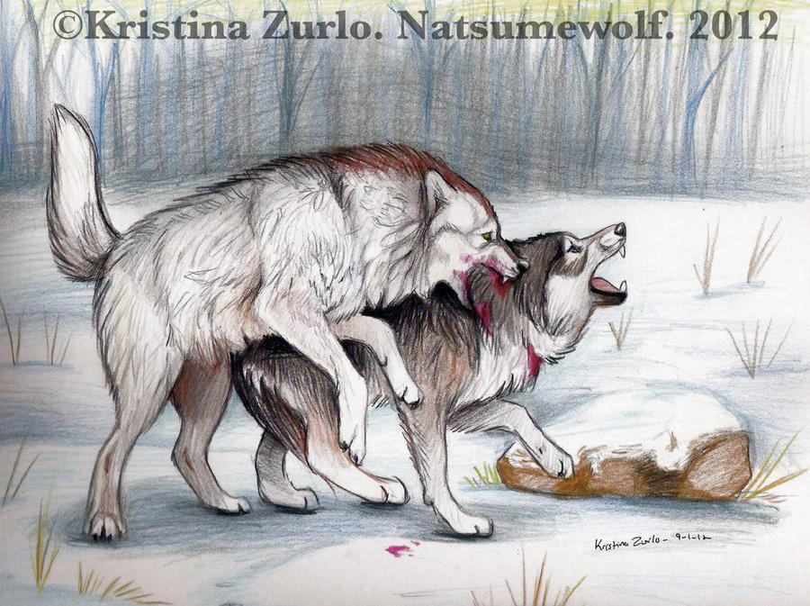 Alpha male Fight by NatsumeWolf