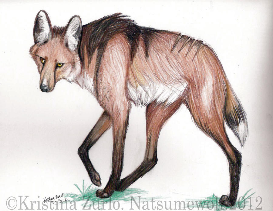 Zurui Wolf by NatsumeWolf