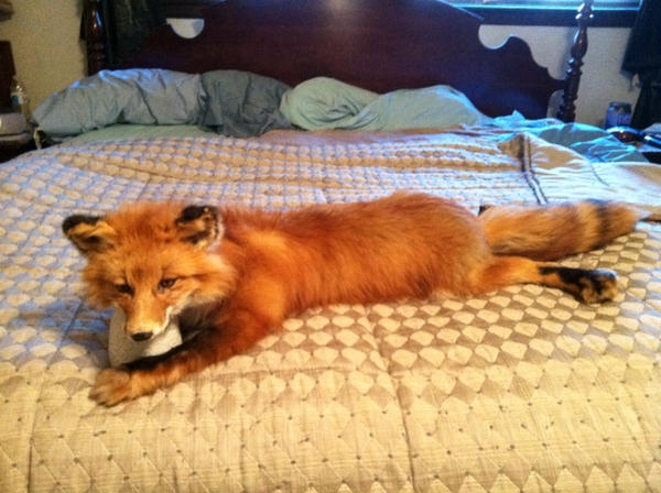Red Fox SOLD by NatsumeWolf