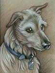 Colored Pencils -Dog Portrait
