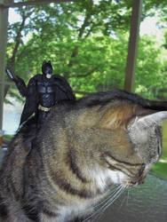 Bats And Comic Show 4-27-2014 055
