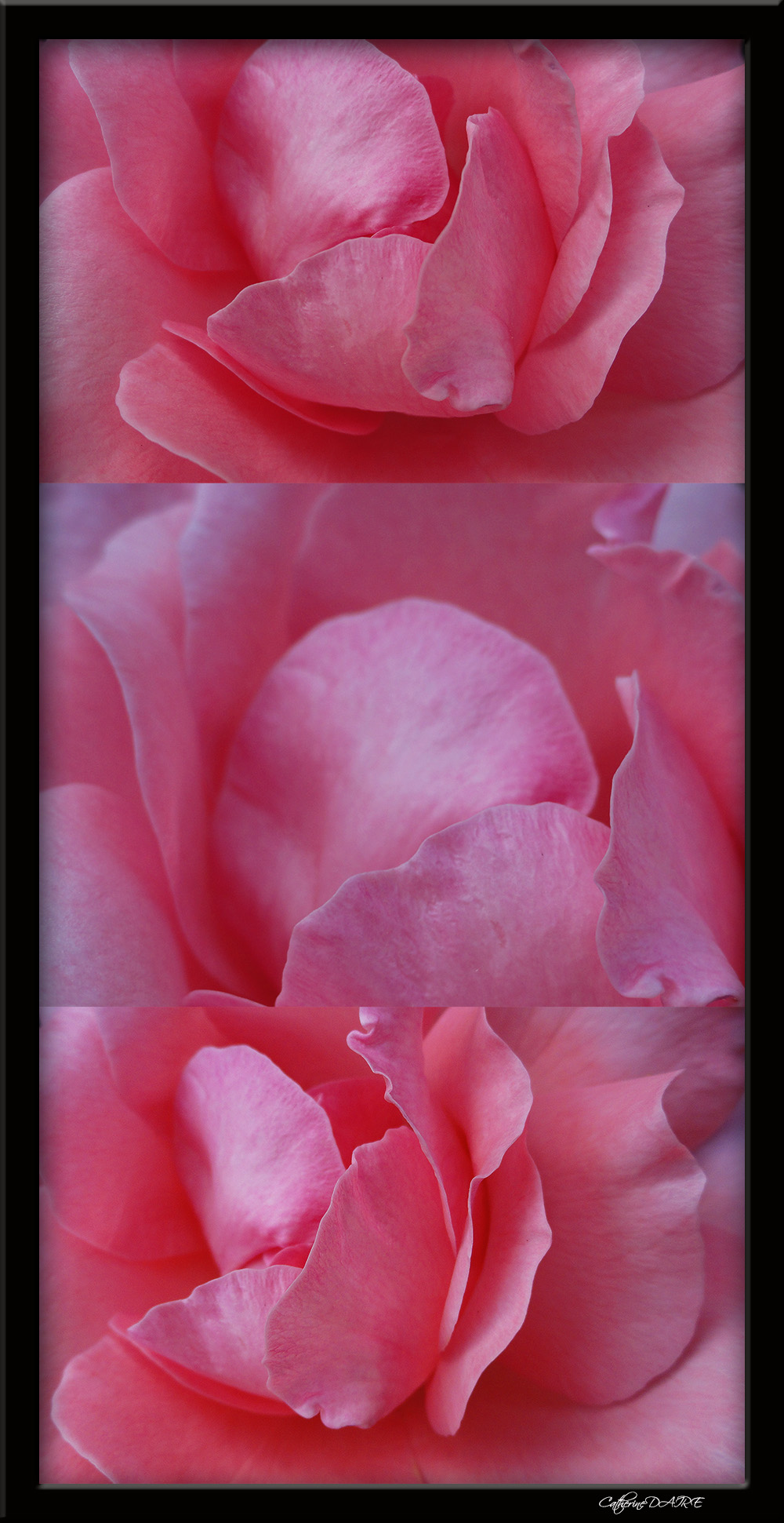 Petales de roses by bellesymphorine on deviantart - Petales de roses sechees ...