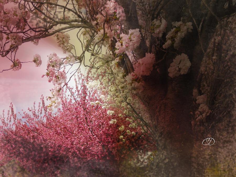CERISIERS A FLEURS by BELLESYMPHORINE