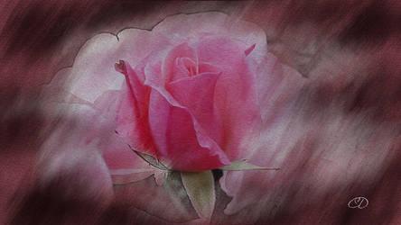 ROSE 27 by BELLESYMPHORINE