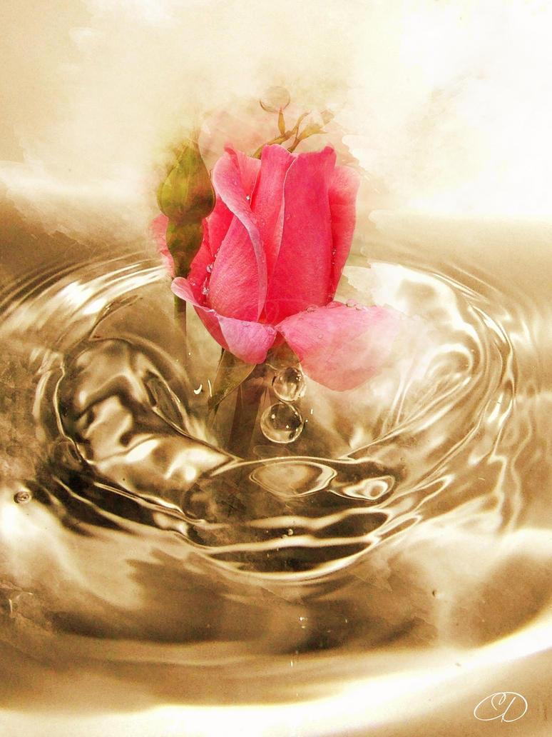 ROSE (PRINTEMPS/ ETE 2013 30) by BELLESYMPHORINE