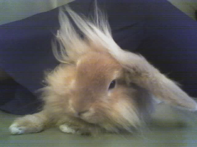 Cloud Strife in Rabbit Form by Liz-Lxil
