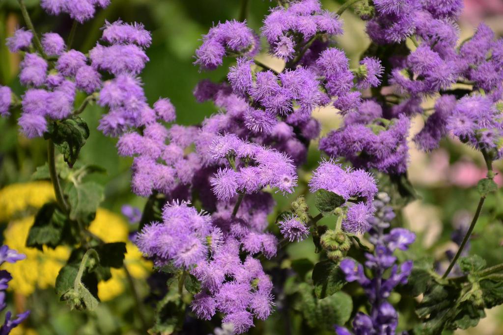 Purple Fuzz by Splippyfop