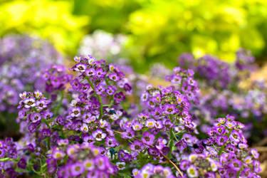 Purple Bundle by Splippyfop