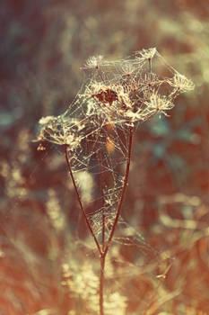 A web of light.