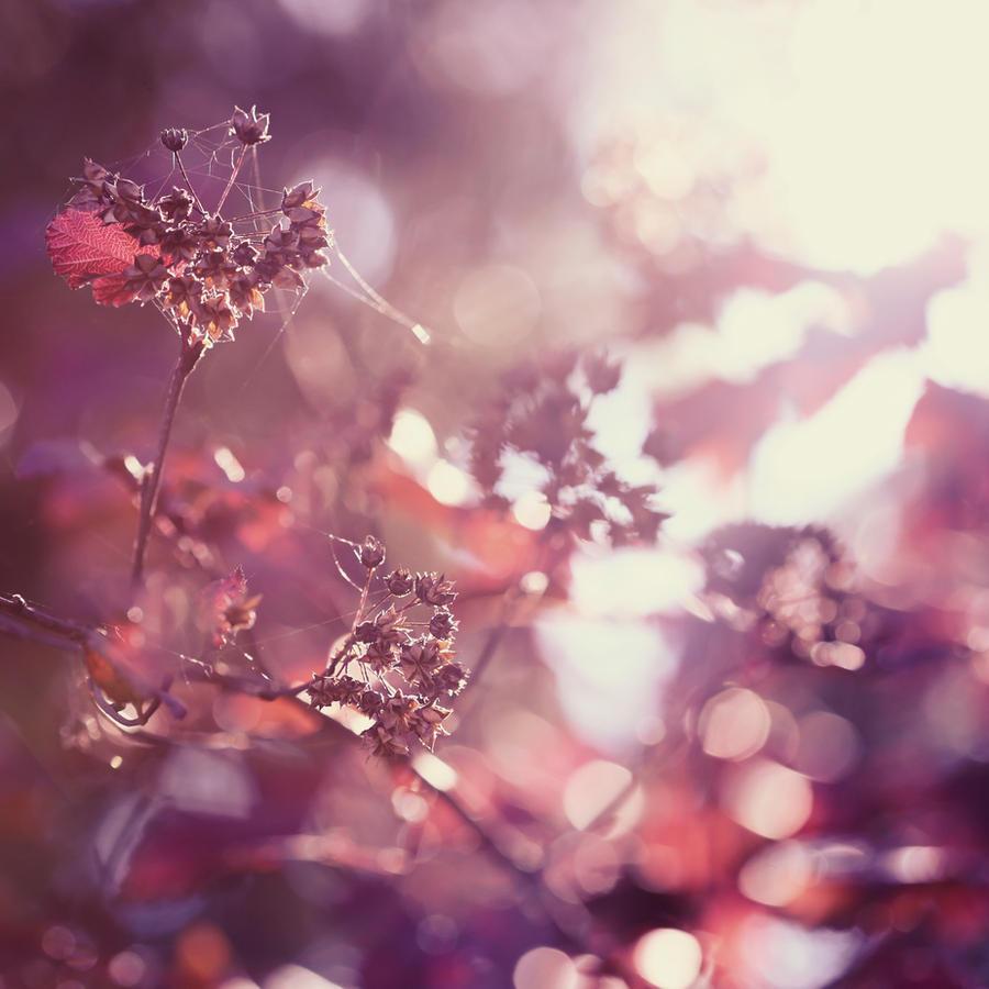 .Flickering. by cichutko
