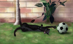 Pet third commission