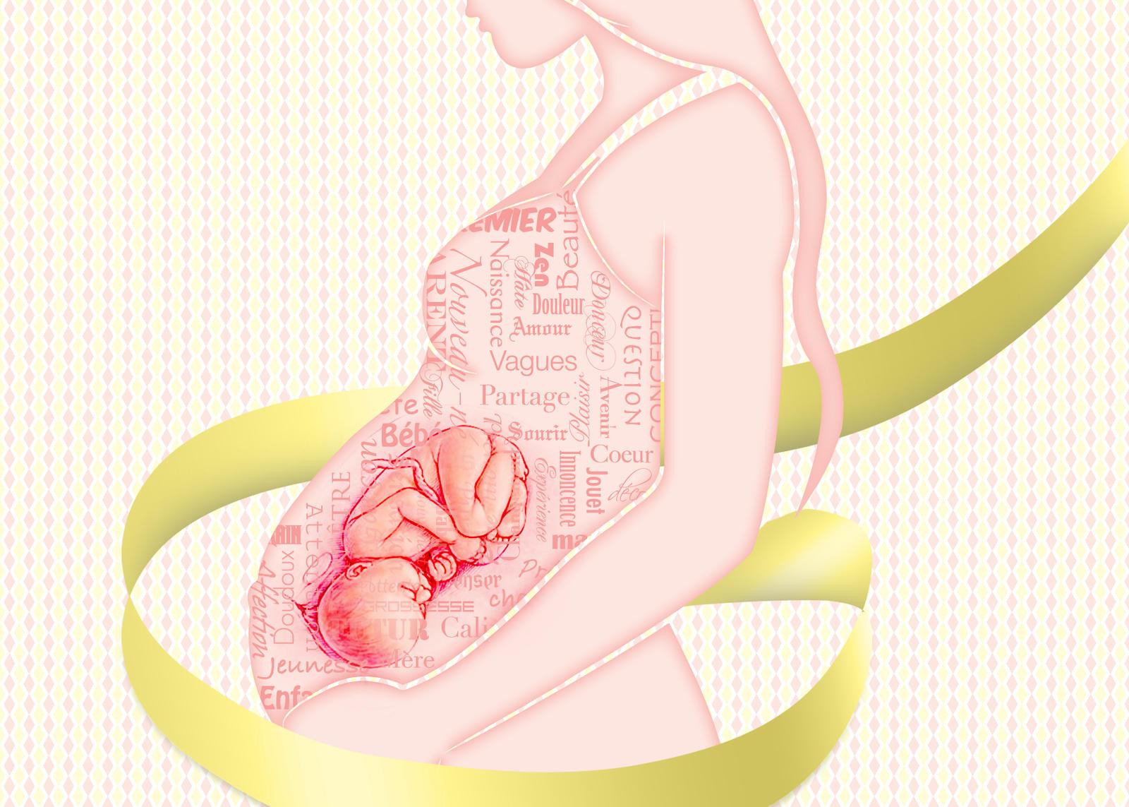 Pregnancy by genebela