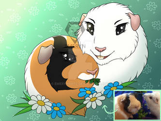 Guineapig brothers