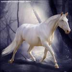 Horse by KirraHEE