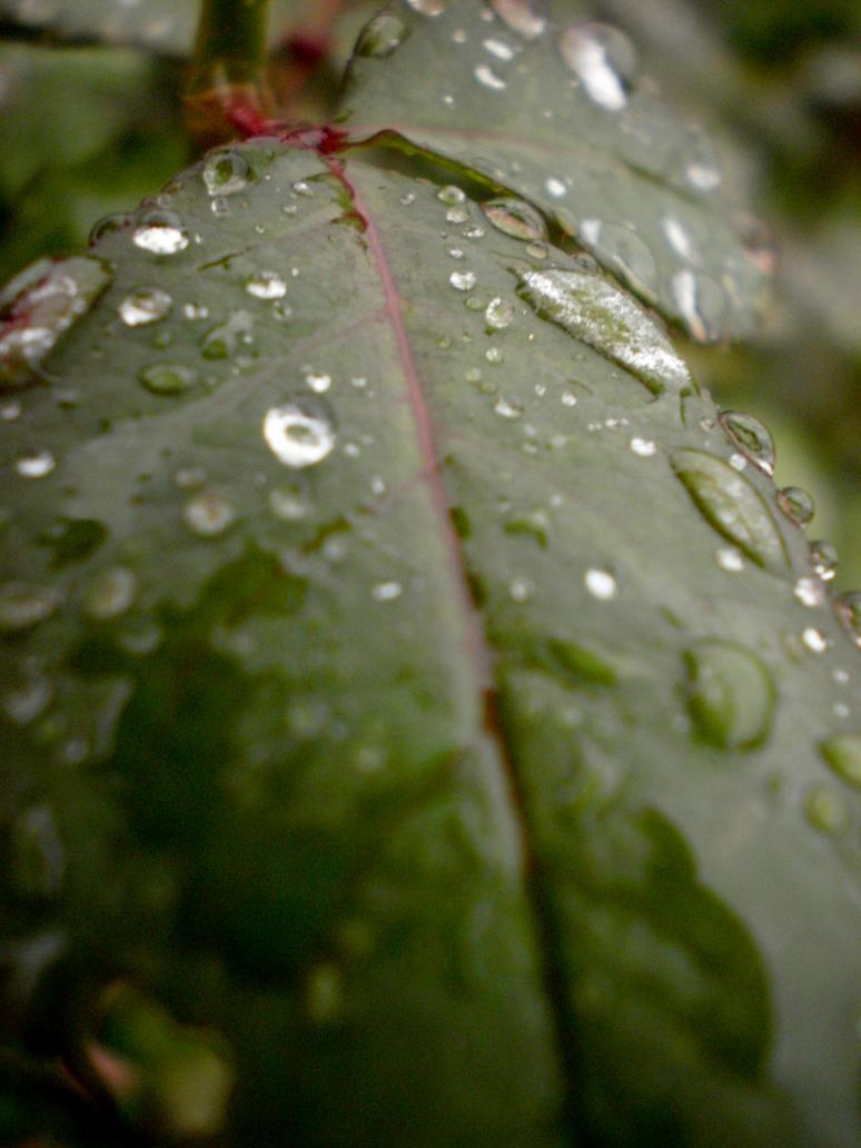 Water Droplets by digitalfreakart