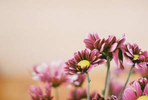 Flowers by daxxbondoc