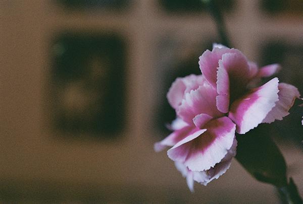 Flower by daxxbondoc