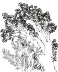 floral-arboreal.3