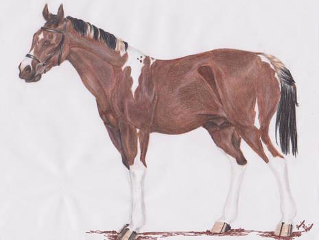 Alakazam l Stallion l Oldenburg