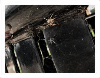 Arachnophobia I by omgcordelia