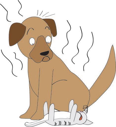 Paper air freshener - smelly dog on board Product details - View ...