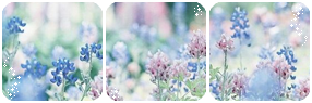 Pastel Flowers Divider by LaraLeeL