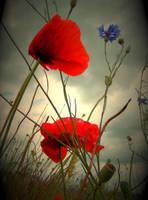 red summer love by bievalhirfoto