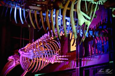 Bones by Ceardach