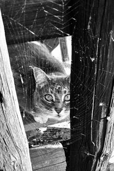 Where is that spider?