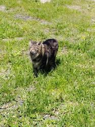 The cat by TexasPanda