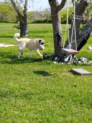 The dog at play by TexasPanda