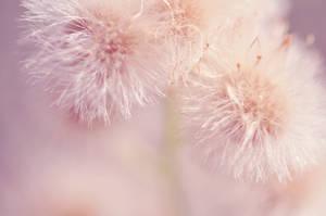 Dandelion Wonderland