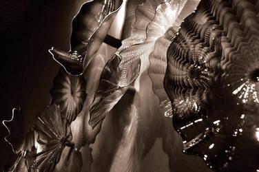 Light Reflex by Robert-Hartland