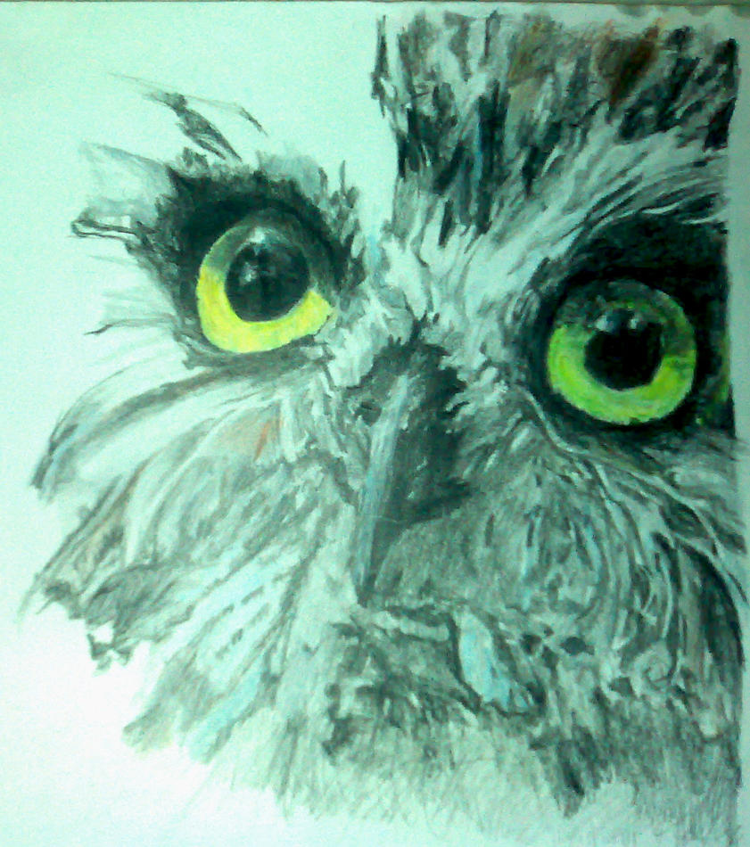 Owl Drawing Color Owl in Color Pencil by