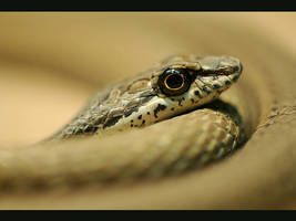 Snake by UG3