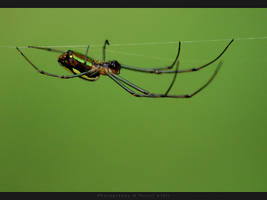 Spider in the air by UG3