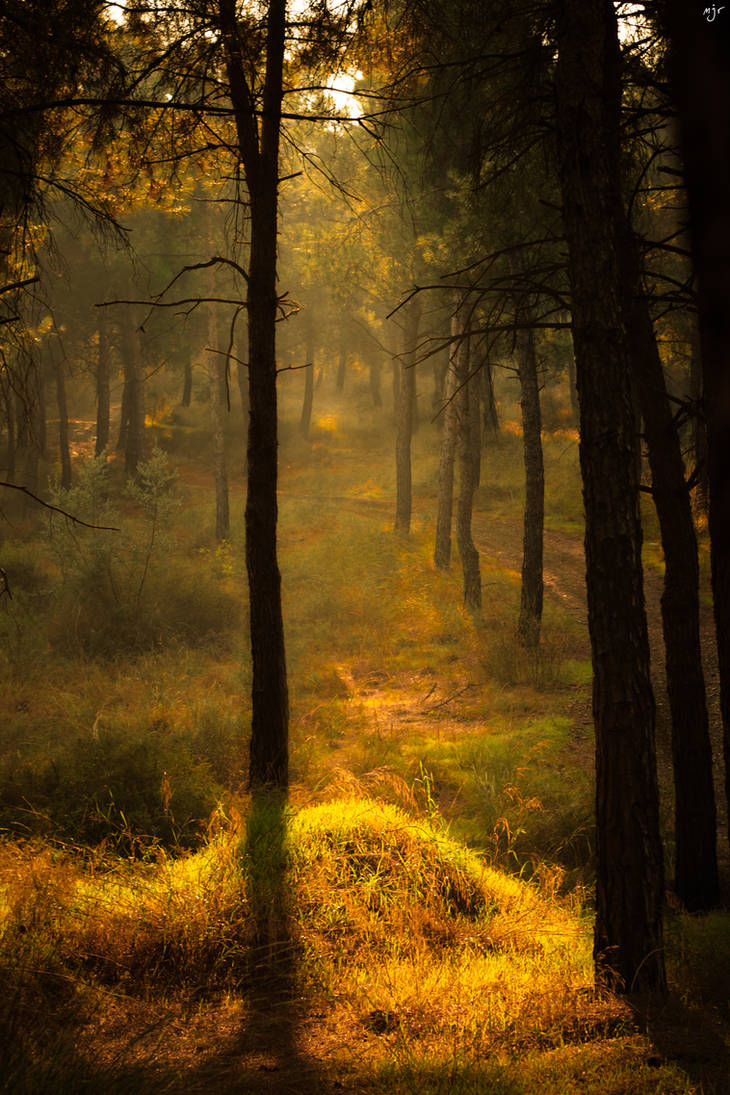 Sunlit Wood