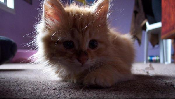 cat by cucuncu33