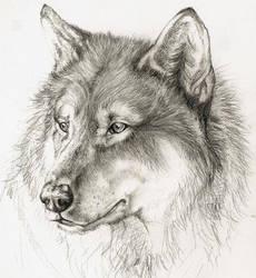 Wolf by xChelseax92