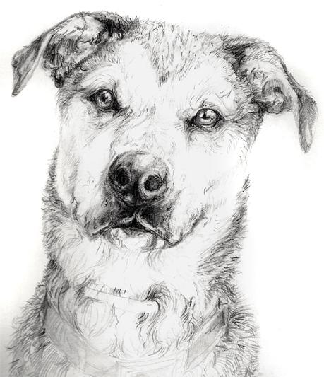 Dog by xChelseax92