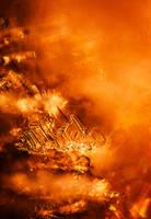 Burn by Tam3n