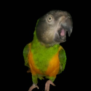 lestnill's Profile Picture
